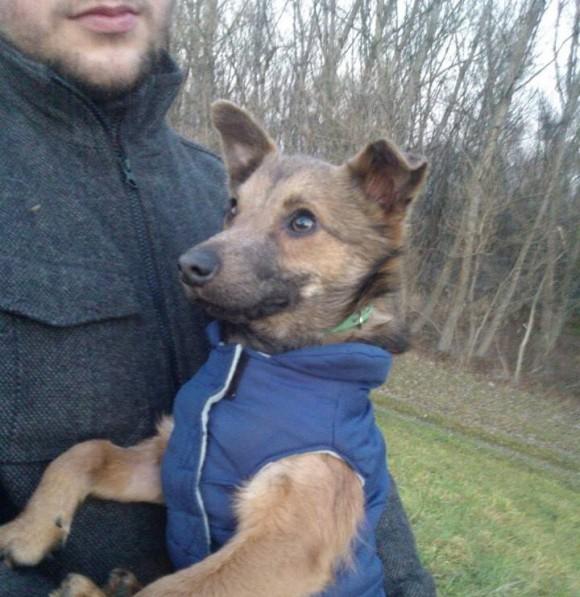 VUK - nájdený slepý psík v zúboženom stave!!