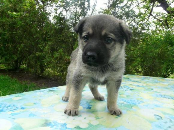 Giorgi - šteniatko nájdene v krabici