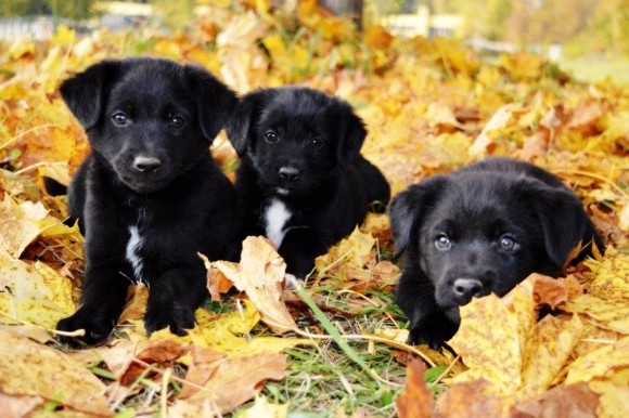 Nádherné šteňušky
